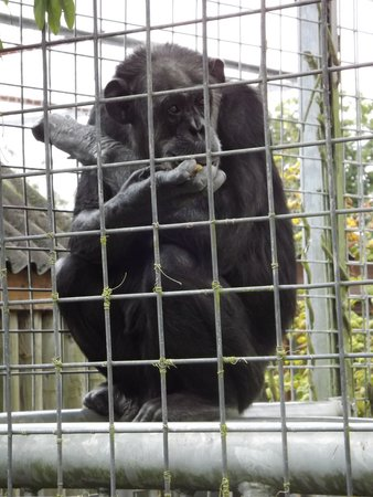 Africa Alive!: Only the one chimp from what we saw?