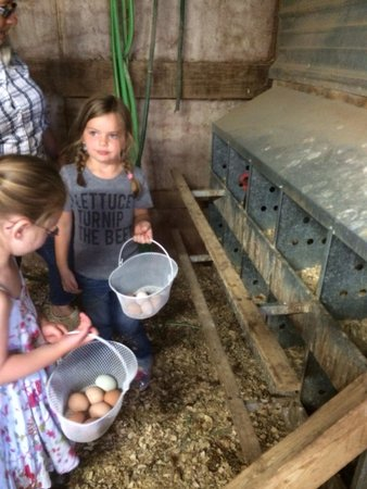 Country Girl at Heart Farm Bed & Breakfast: Collecting eggs, and boy were they yummy!
