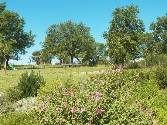 La Grange de Rocamadour : Le terrain arboré