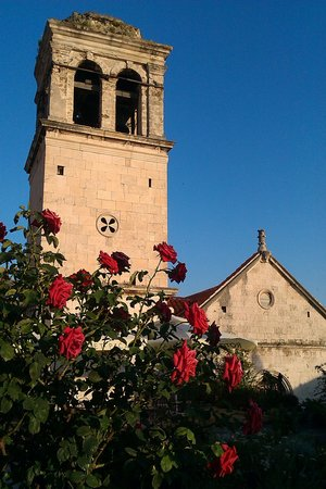Medieval Mediteranean Garden: розы