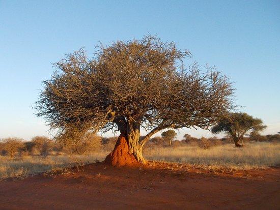 Jaci's Tree Lodge: paesaggio