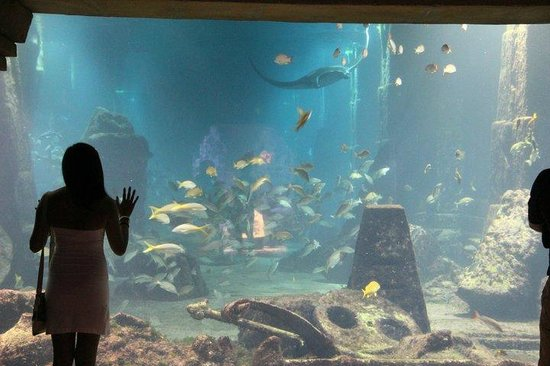 Atlantis, Coral Towers, Autograph Collection: One of the humongous aquariums