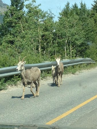 Cameron Lake : Wildlife spotted on drive to lake.