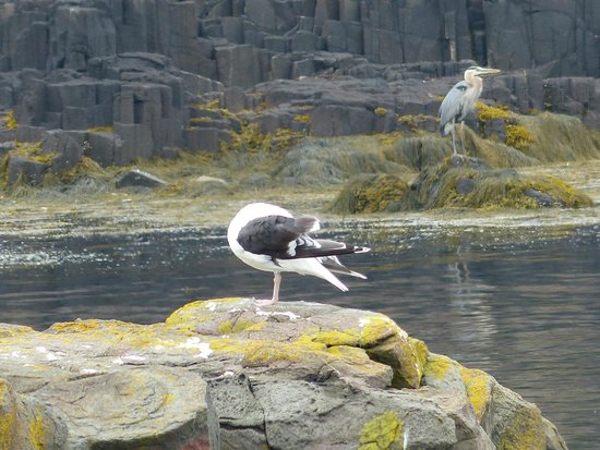 Brier Island Lodge : Seagull and heron