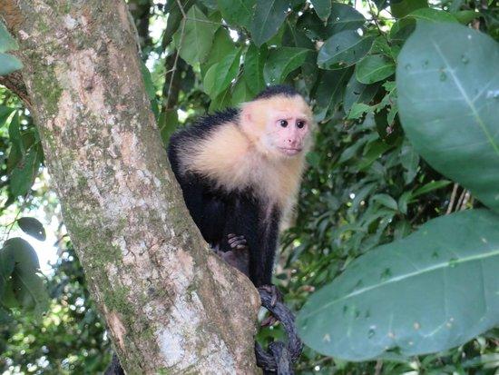 Playa Manuel Antonio: Monkey Poser