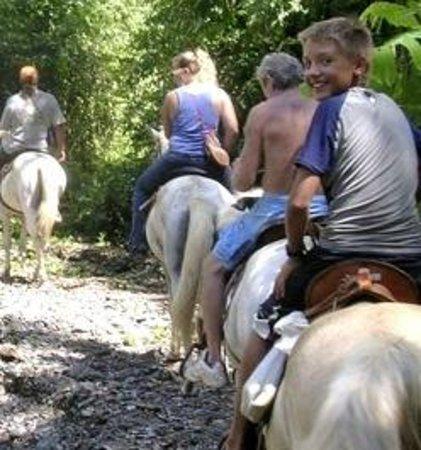 Dolphin Quest : Enjoy a Horseback-ride through the Piedras Blancas National Park