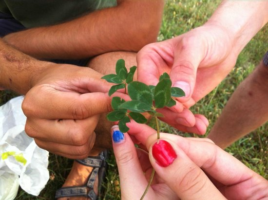 Slow Tours - Bike Tours: Four leaf clovers we found on the trip