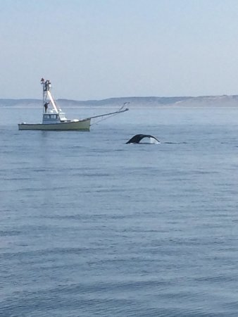 Hyannis Whale Watcher Cruises : Whale!