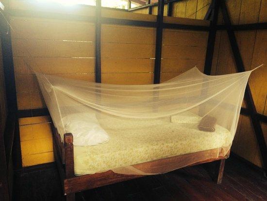 Dolphin Quest : Casa Verde- Single Bed