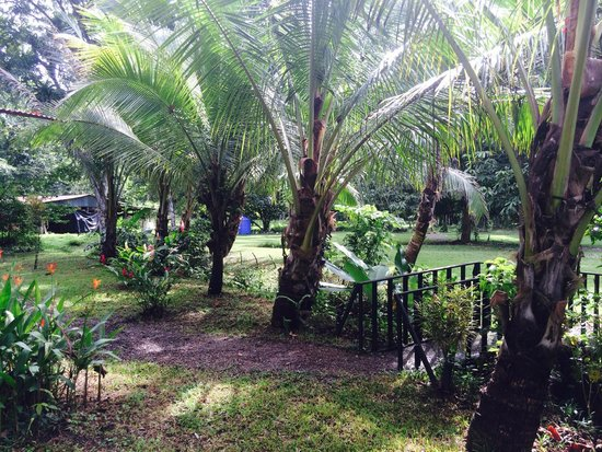 Dolphin Quest : Casa Verde- Surrounded by Palm Trees