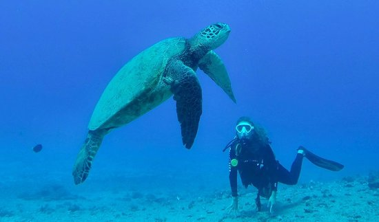 Island Divers Hawaii: You'll get to see a lot of these guys. Don't touch them!