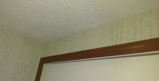 Rhumb Line Resort: We had some additional guests that came with the room. #somanyspiders