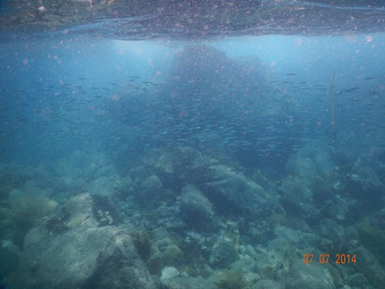 Captain Alan's Three Island Snorkeling Adventure : Incredible snorkeling spots