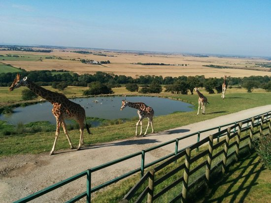 Port Lympne Reserve : The view from Lion tent, Livingstone Lodge