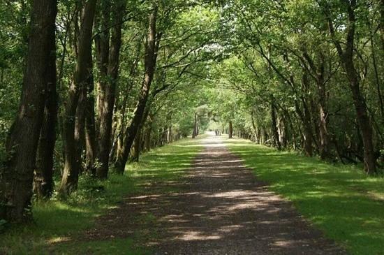 Torre Avon: Path on the bike ride between Burley and Brockenhurst