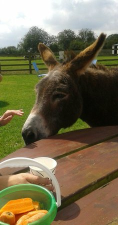 Radcliffe Donkey Sanctuary: Our tea companion :)