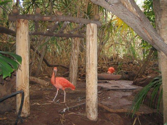 R2 Bahia Playa: oasis park