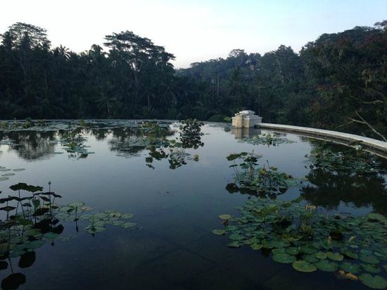 Four Seasons Resort Bali at Sayan : Gorgeous lotus ponds on rooftops of the hotel