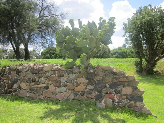 Teotihuacan : Naturaleza nativa, arbusto de tunas.