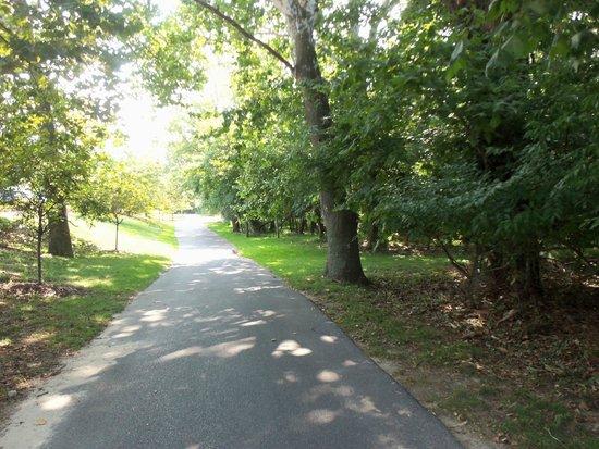 Hyatt Regency Chesapeake Bay Golf Resort, Spa & Marina: road near golf course