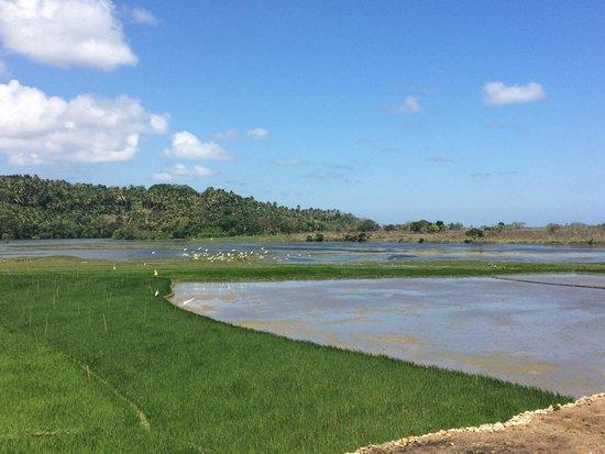 Nihiwatu: rice fields hike