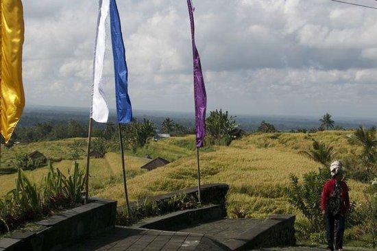 Tegalalang Rice Terrace: Nice pathways to follow