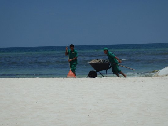 Secrets Silversands Riviera Cancun: Keeping the beach clean106358575