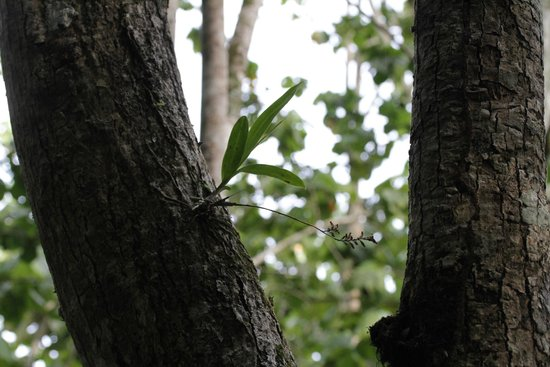 Guajataca Forest Reserve: A Look through a Tree