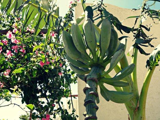 Studios Crete: garden