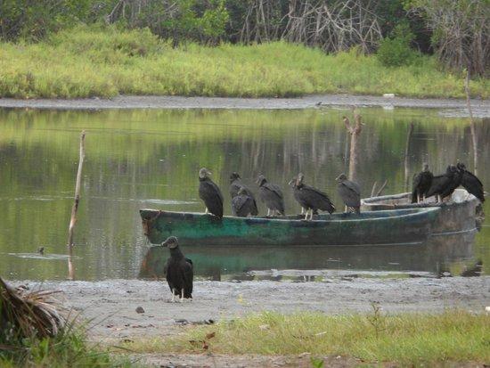 Hacienda La Rusa B&B: birds shot when walking