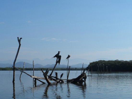 Hacienda La Rusa B&B: birds shot from boat trip