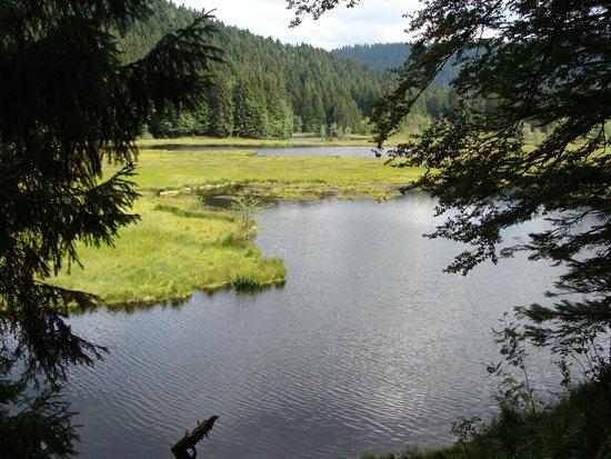 Chez Jeanmyvonne : Lac de Lispach