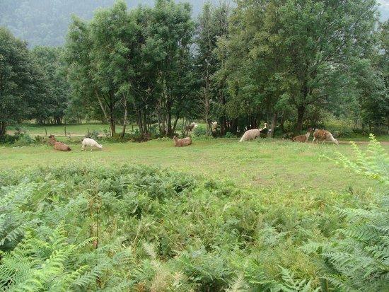 Chez Jeanmyvonne : Parc des Lamas