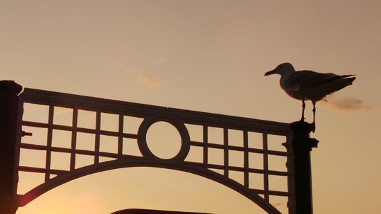 Cavalaire Hotel: Seagull