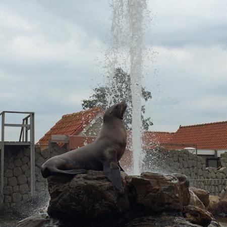 Dolfinarium : steller zeeleeuw