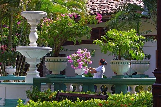 Hotel Dario: Jardin Principal