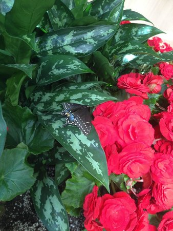 Best Western Plus Lamplighter Inn & Conference Centre: Beautiful butterfly resting on a red begonia in the Atrium area