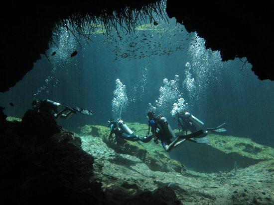 Planet Scuba Mexico: Buceando en cenotes con Planet Scuba México.