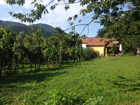 Il Ciliegiolo: Vue extérieure (de derrière la maison)