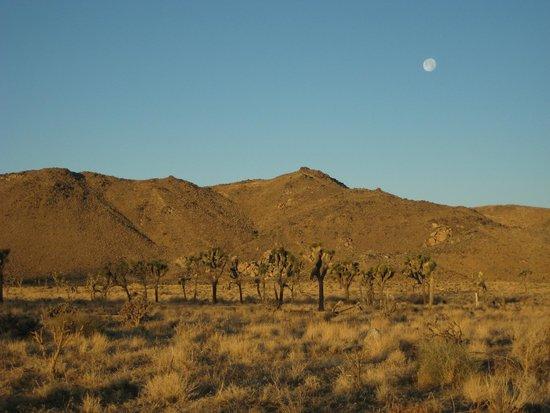 Joshua Tree National Park: Amanhecer
