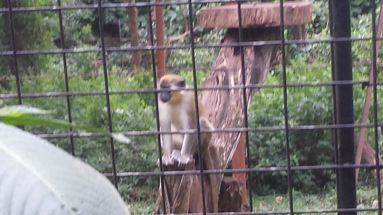 Zoo Ave: cute monkeys