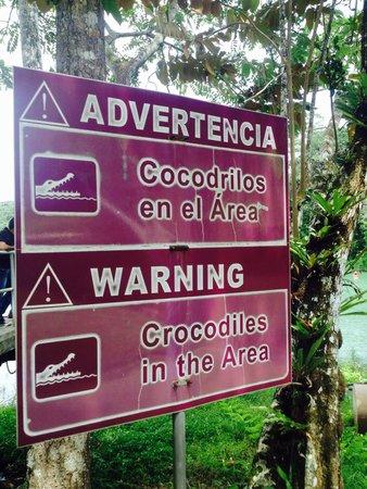 Barro Colorado Island: cocodrilos