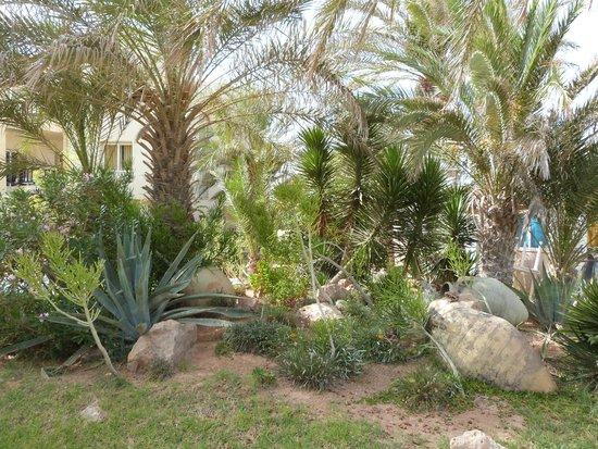 Eden Star Zarzis : Jardins hôtel