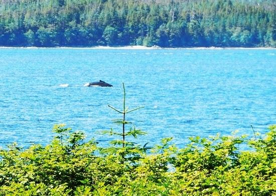 Totem Bight State Historical Park: a whale of a view from the park