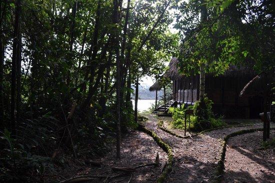 Cotococha Amazon Lodge: El predio del hotel por la mañana