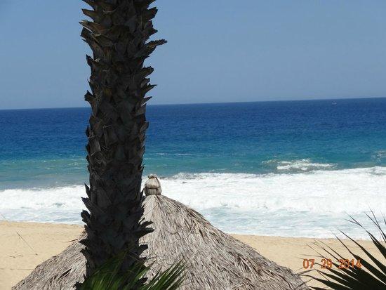 Hacienda del Mar Los Cabos: Ocean