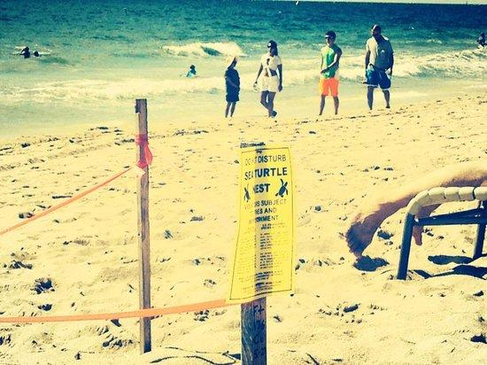 Fort Lauderdale Marriott Harbor Beach Resort & Spa: Save the SEA TURTLES area!