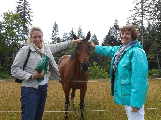 Two Eagles Lodge : Resident horses