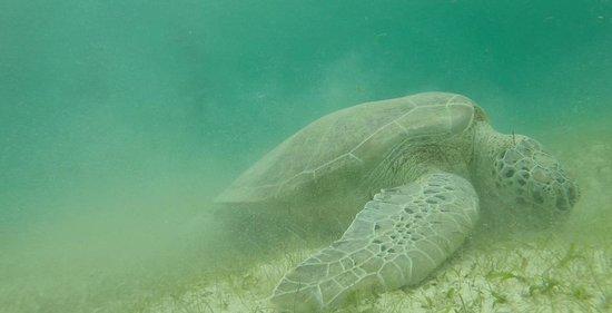 Patou Excursions : Une tortue à Petite-Terre