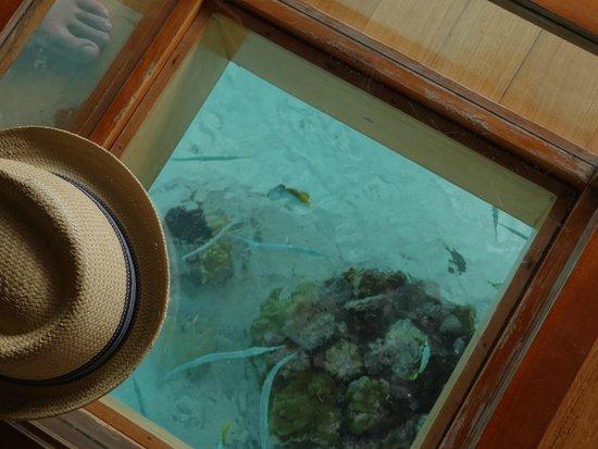 Bora Bora Pearl Beach Resort & Spa: Fish under the bungalow (see through table)